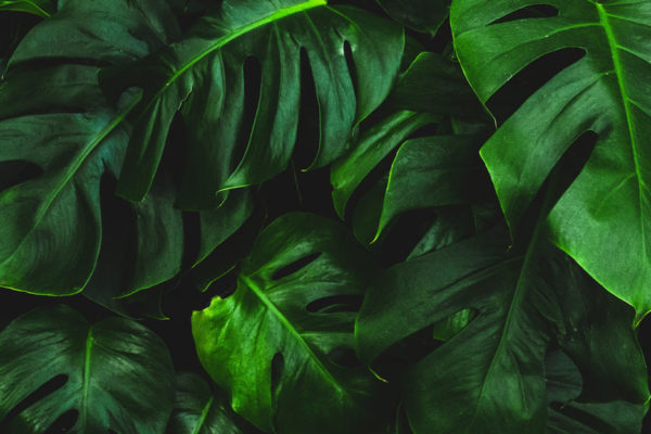 plant-background
